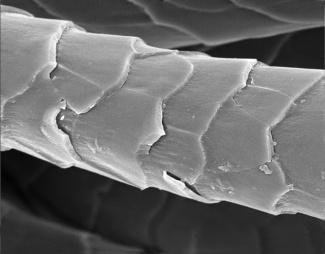 wool up close microscope